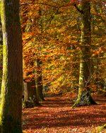 Aberglasney Woodland