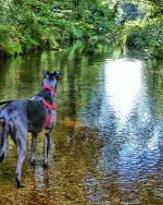 greyhound, river, rainbow bridge,