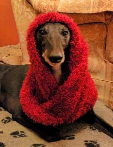 Penny Dignam, Penny the Crafty Dog, Crafty Dog