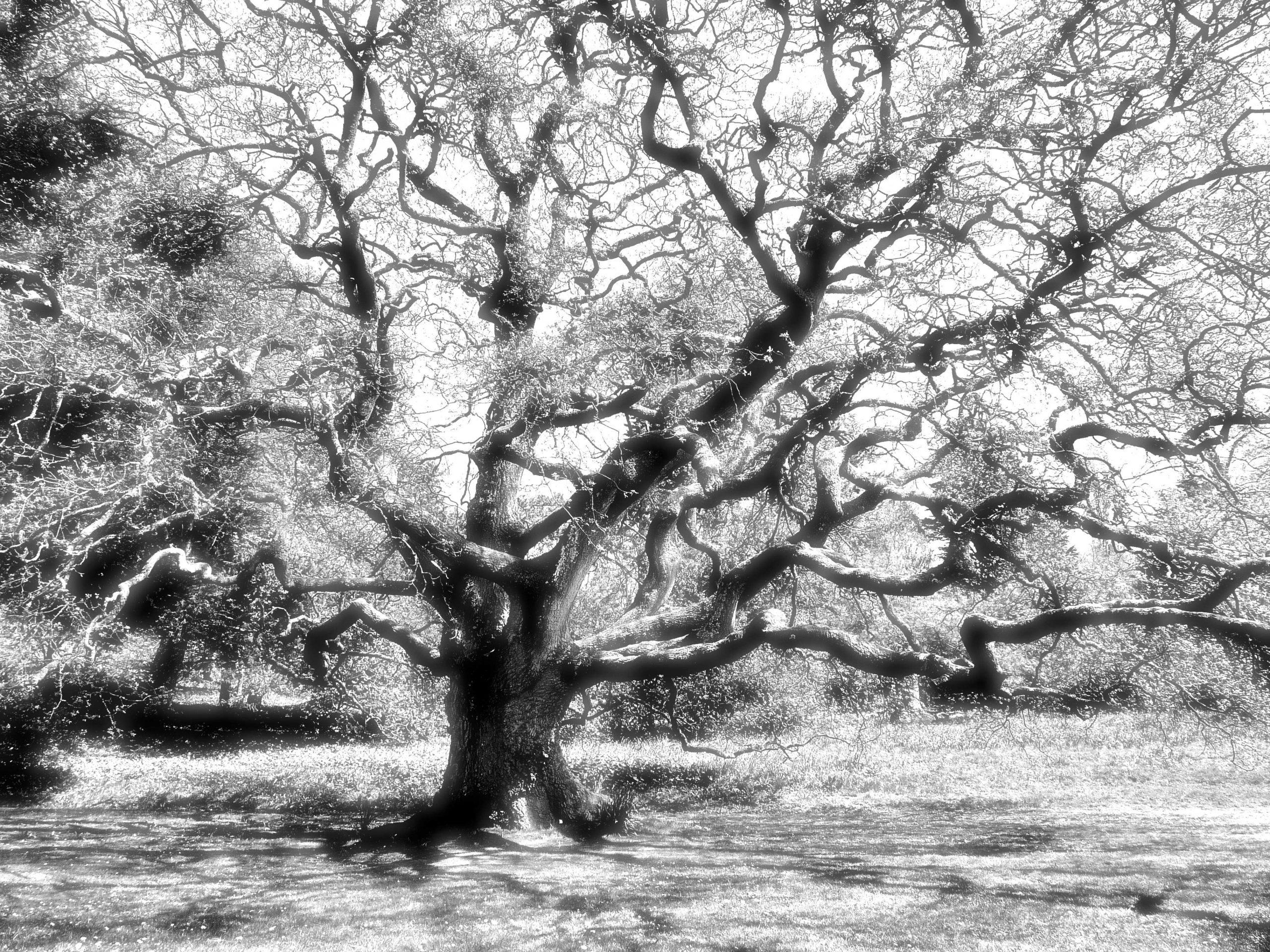 Wychwood, The Tree, Old Oak, ghosts, eerie, spooky
