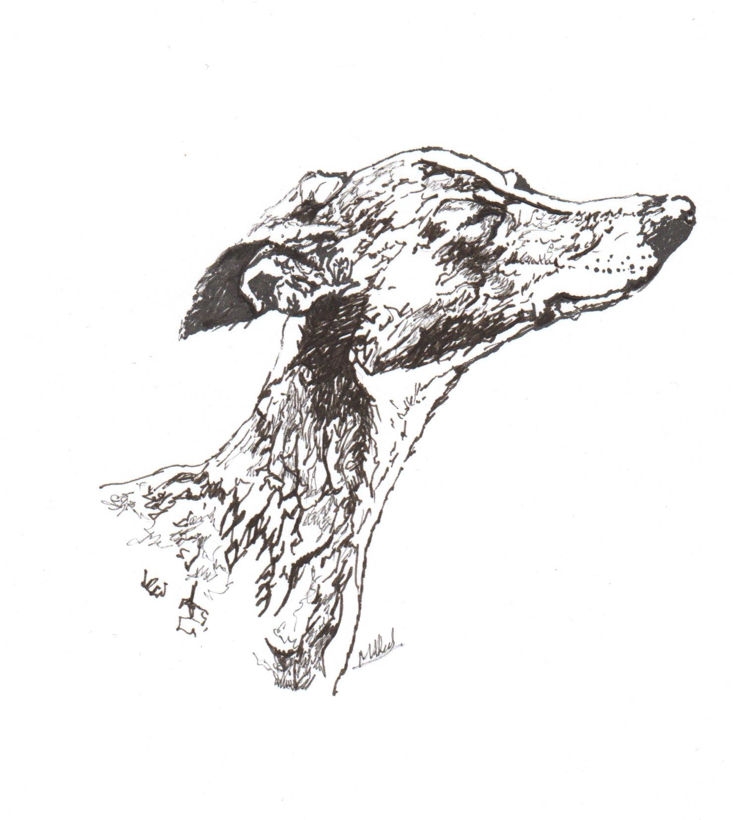 Rubbish, Greyhound, Greyhound Pup, Puppy, Winter Hare