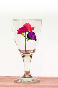 Welsh Glass, Flower Glass, Flower Art, Sweet Pea, Pea Flower, Welsh Glass, Welsh Art